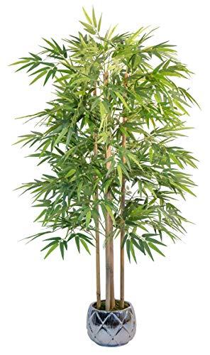 Maia Shop 1137 Bambú Cañas Naturales, Elaborados con los Mejores Materiales, Ideal para...