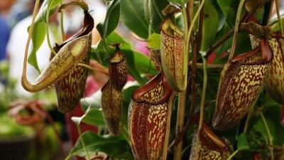 donde comprar plantas carnivoras