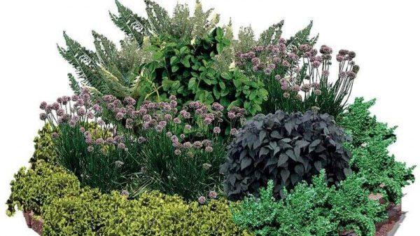Comprar Plantas aromaticas online